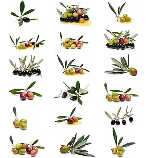 Variedad de aceite de oliva